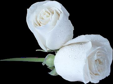 fleurs roses. Black Bedroom Furniture Sets. Home Design Ideas