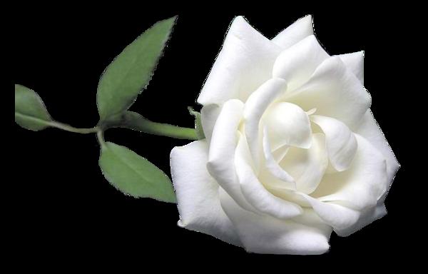 fleurs roses - page 2