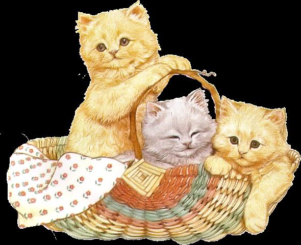 chats dans son panier